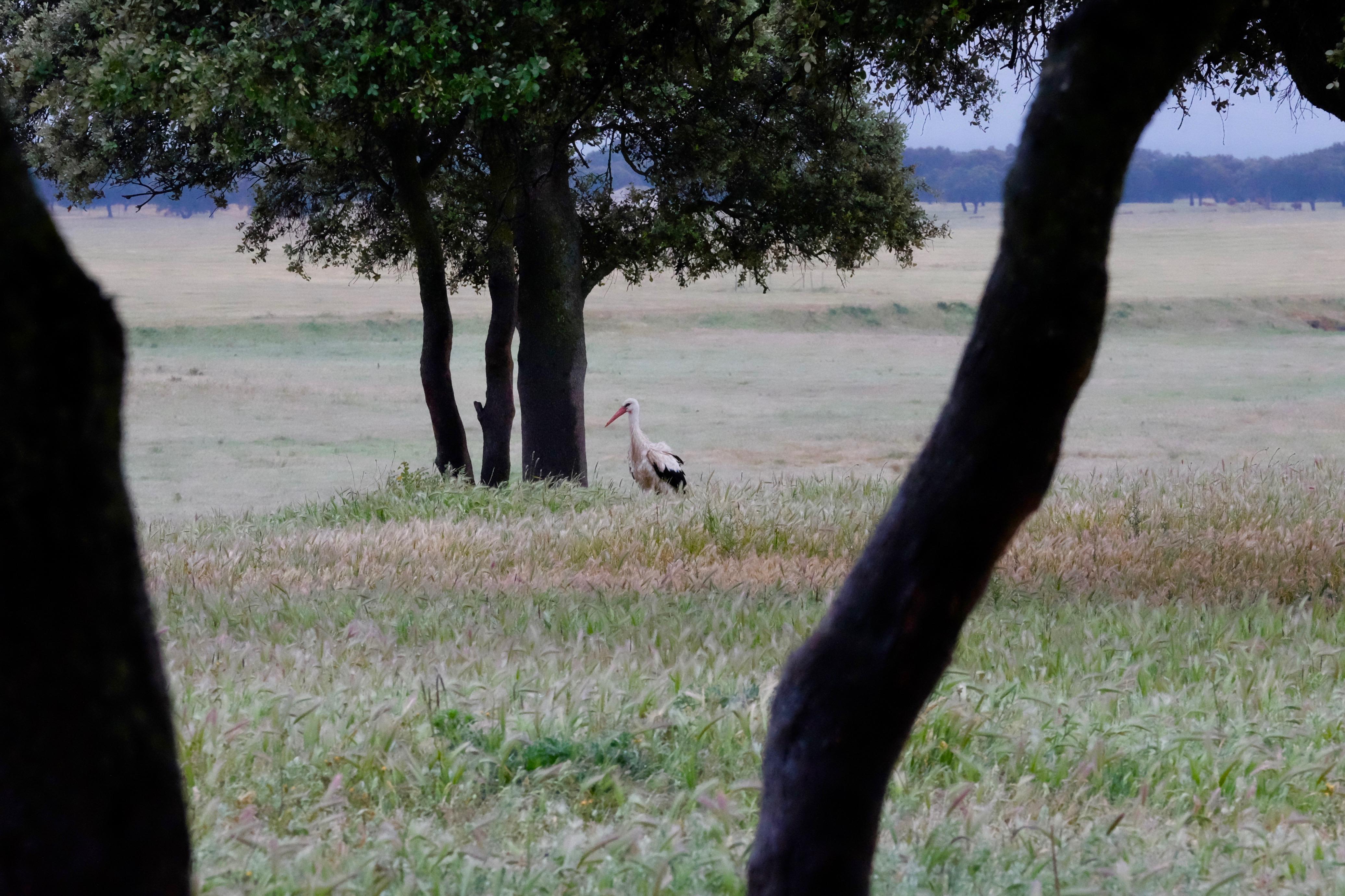 Extremadura, Spain 2017 04